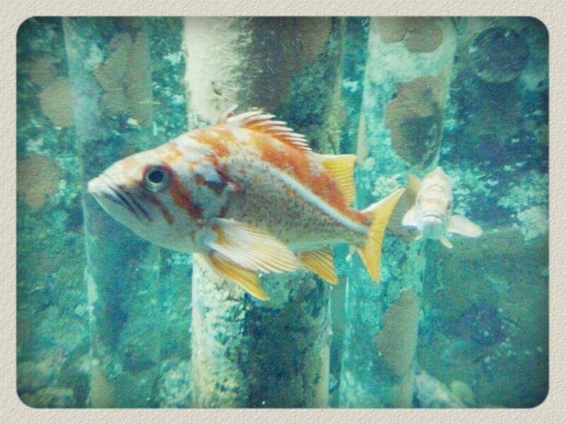 SN-fishface