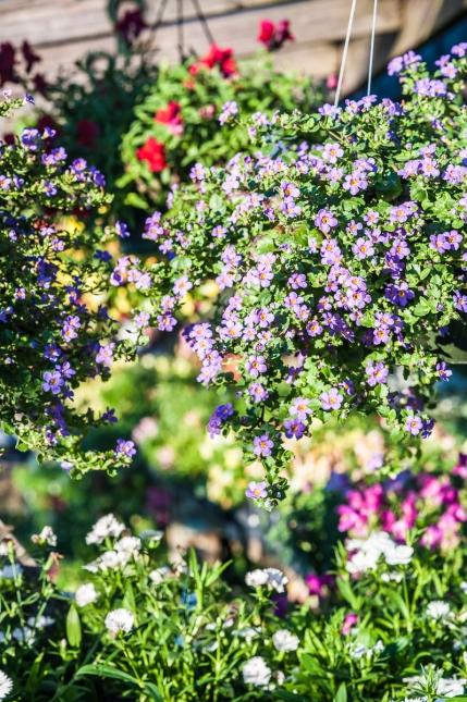 Flowers 2-2