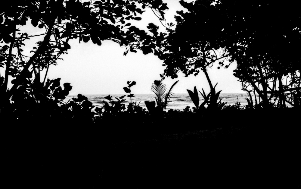 """Ocean View from the Jungle""  Parque Tayronas Nacional, Columbia.  2000. Format: scan of BW negative."