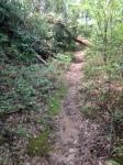 hambidge forest
