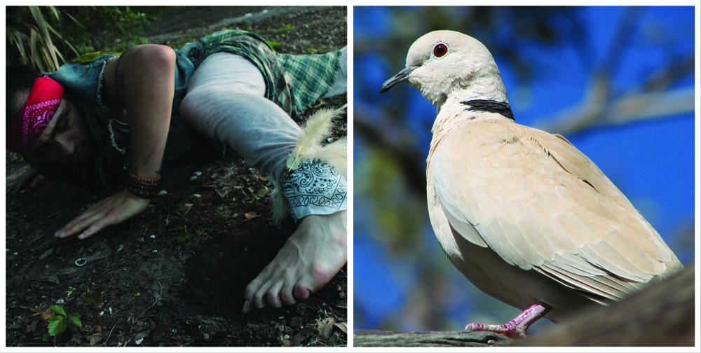 ALAN and bird