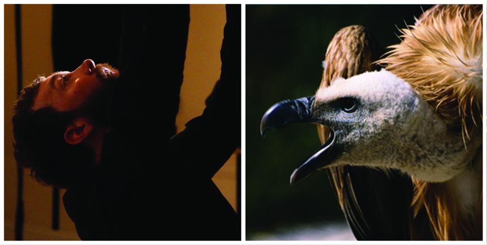 CALVIN and bird