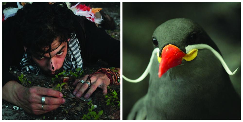 JULIAN and bird